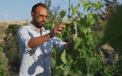 """In vino veritas, la nuova vita di Giuseppe"""