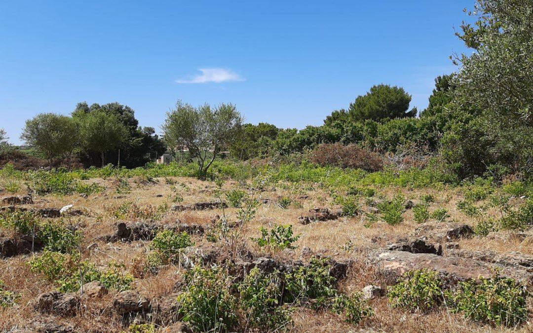 Montevago, torna fruibile la zona archeologica della Villa Romana